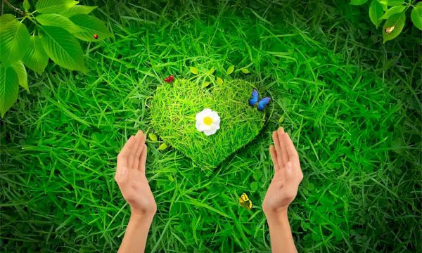 GreenGame - Любовта към тревата