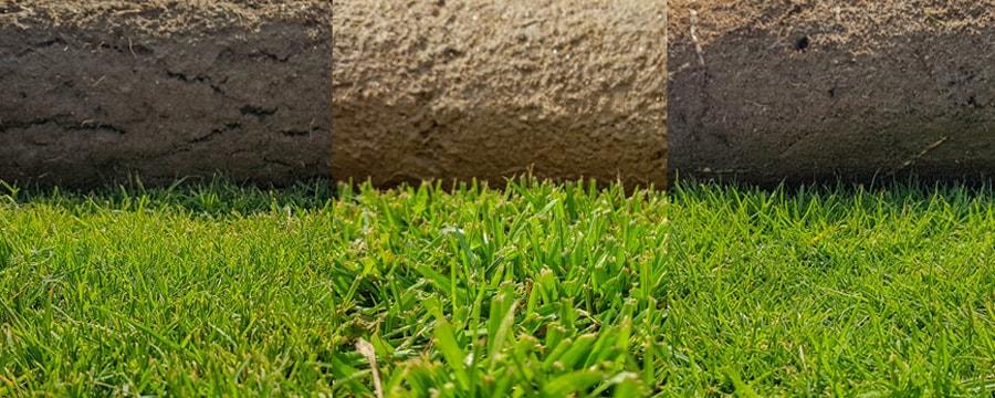 Тревни чимове - видове сортове